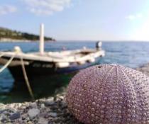 Morski dan, Lucija Vukorep