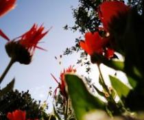 Proljeće se budi, Katja Juras